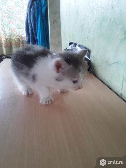 Котята. Фото 5.