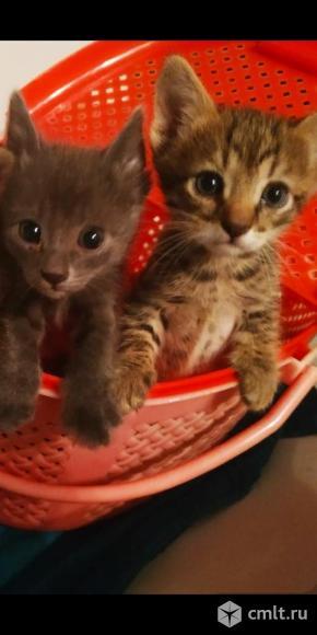 Красавцы котята в добрые руки. Фото 1.