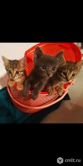 Красавцы котята в добрые руки. Фото 3.