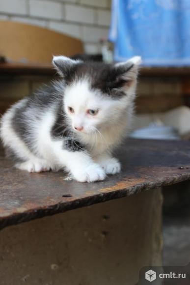 Отдам котят в добрые руки, бесплатно. Фото 6.