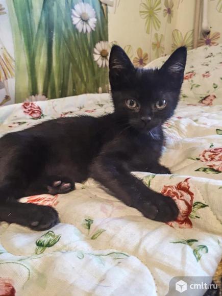 Ласковые всеядные котята.. Фото 2.