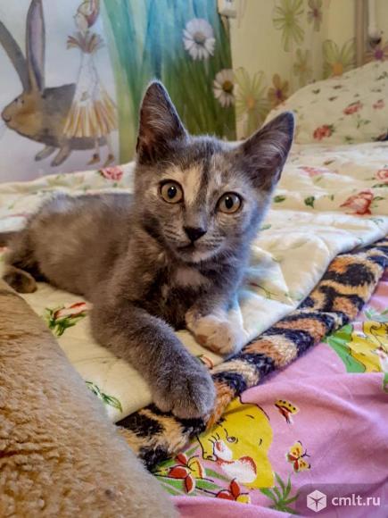 Ласковые всеядные котята.. Фото 1.