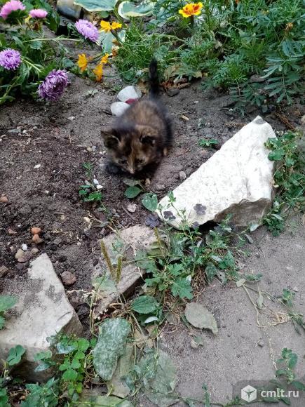 Отдам котенка. Фото 3.