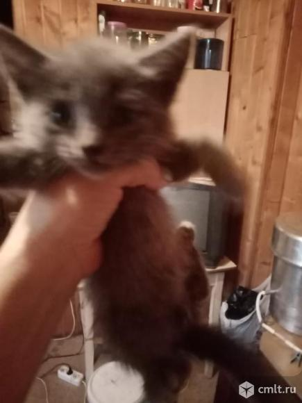 Отдадим в дар милых котят. Фото 6.