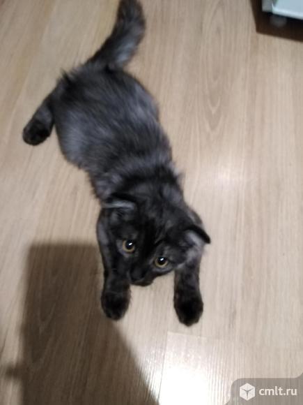Подарю кота. Фото 1.