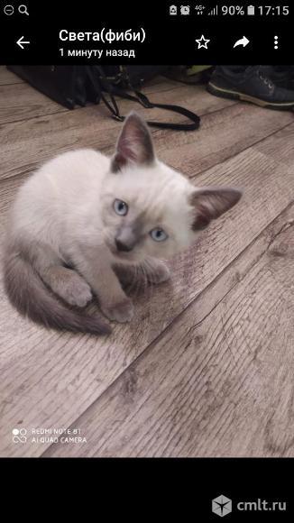 Продам котят. Фото 4.