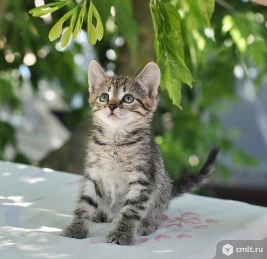Маленький котенок мальчик в дар. Фото 1.