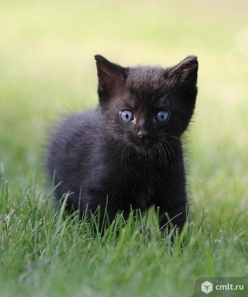 Черный котенок мальчик в дар. Фото 1.