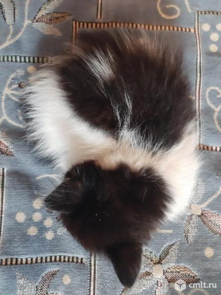 Котята в добрые руки. Фото 8.