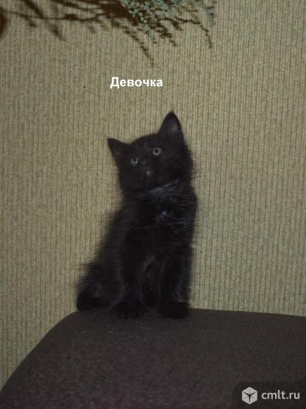 Котят в добрые руки. Фото 1.