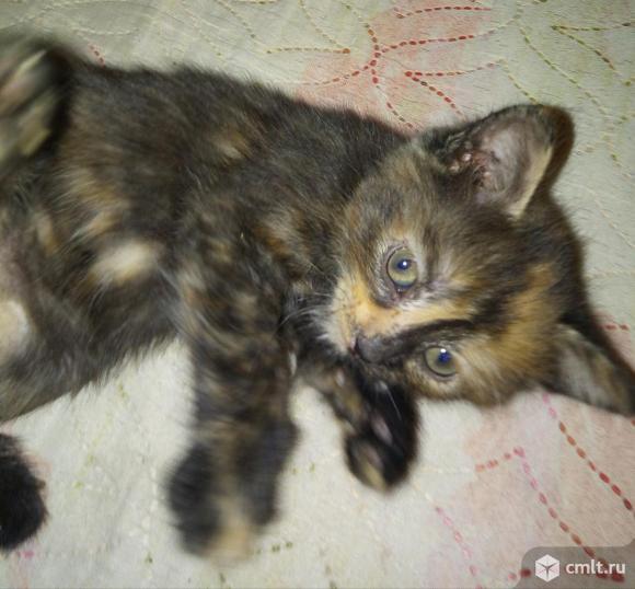 Ласковые котята. Фото 1.