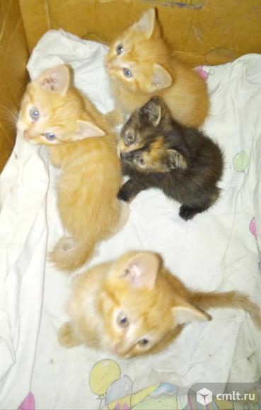 Ласковые котята. Фото 5.