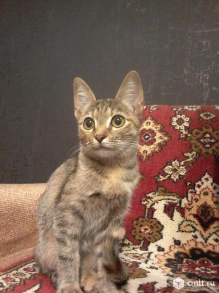 Котенок ищет дом. Фото 1.