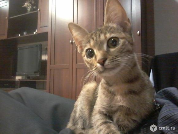 Котенок ищет дом. Фото 6.