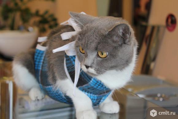 Кошка Галла ждет хозяина. Фото 1.