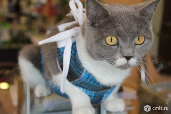 Кошка Галла ждет хозяина. Фото 3.