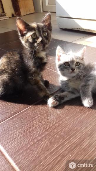 Котята в хорошие руки. Фото 1.