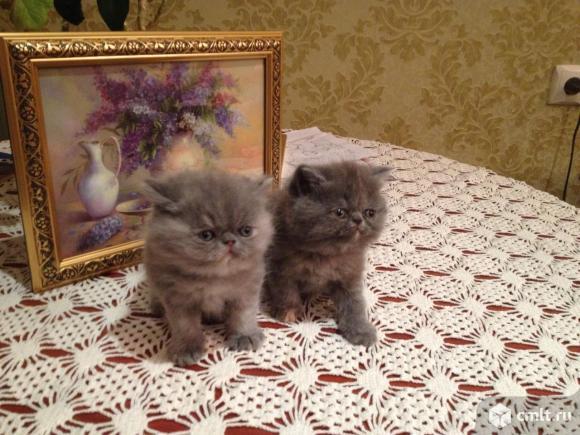 Продажа котят. Фото 1.