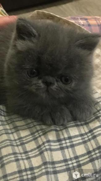 Продажа котят. Фото 5.