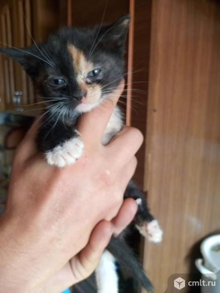 Котята даром. Фото 4.