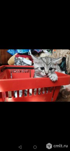 Котята ищут новый дом. Фото 1.