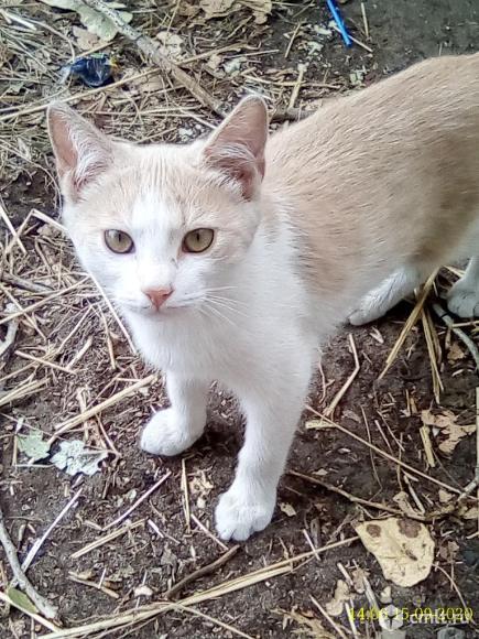Рыжий котенок. Фото 1.