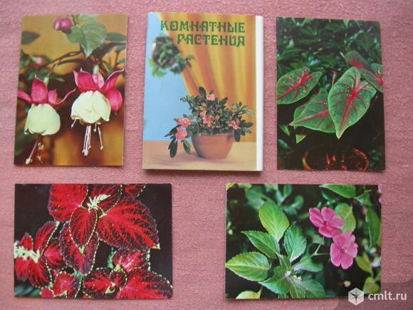 Открытки, комнатные растения, пестрый мир аквариума, грибы. Фото 1.