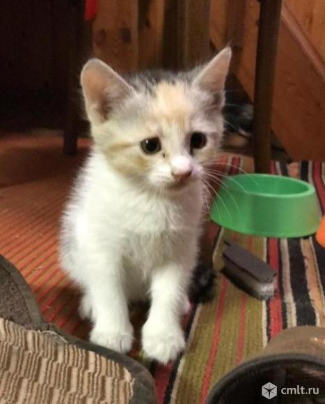 Кошечка ищет родителей!. Фото 1.