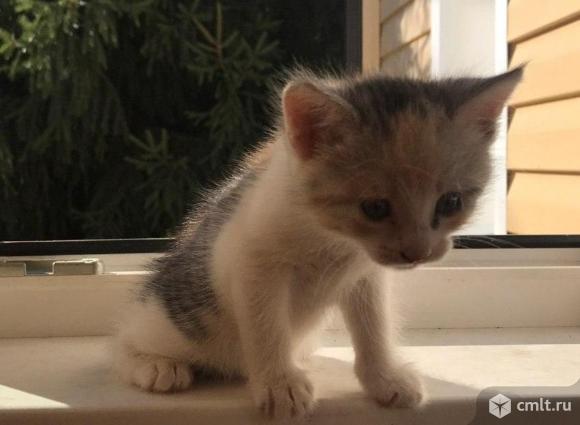 Кошечка ищет родителей!. Фото 3.