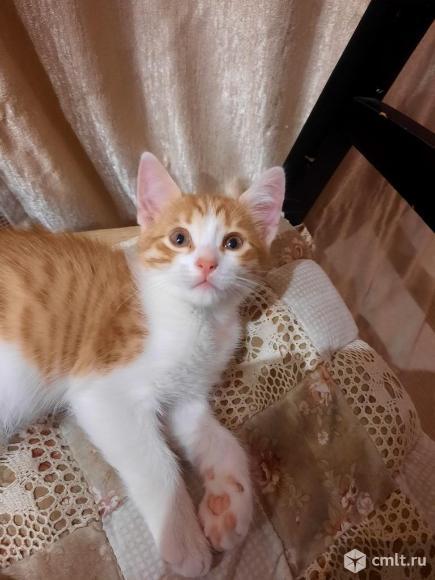 Отдам котенка в добрые руки. Фото 4.