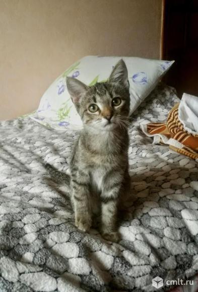 Котёнок в добрые руки. Фото 1.