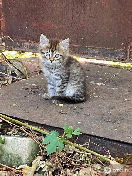 Ласковый котенок ищет дом. Фото 1.