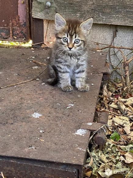 Ласковый котенок ищет дом. Фото 2.