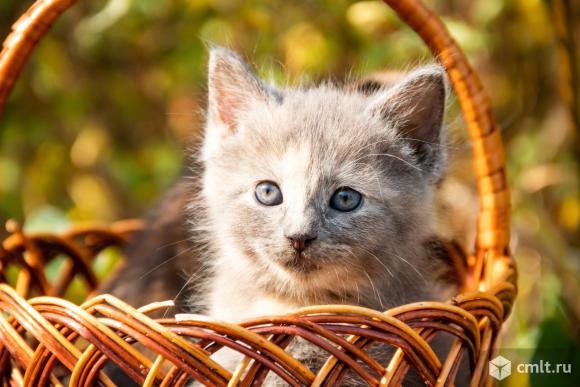 Маленькая кошечка. Фото 1.