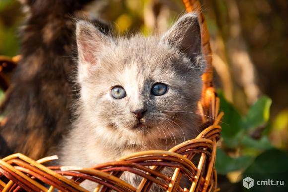 Маленькая кошечка. Фото 5.