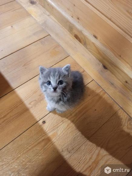 Месячный котенок. Фото 2.