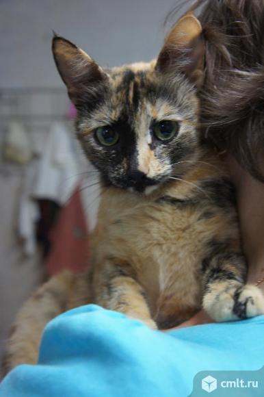 Кошечка Нури ищет дом. Фото 2.