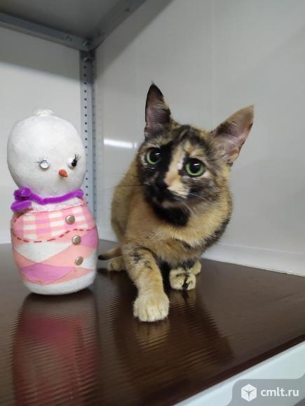 Кошечка Нури ищет дом. Фото 1.