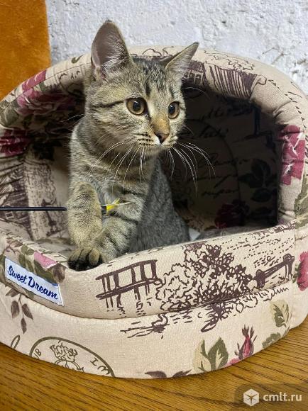 Умный котенок ищет дом. Фото 1.