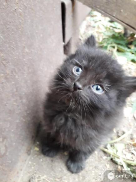 Красивые котята ищут любящий дом. Фото 1.