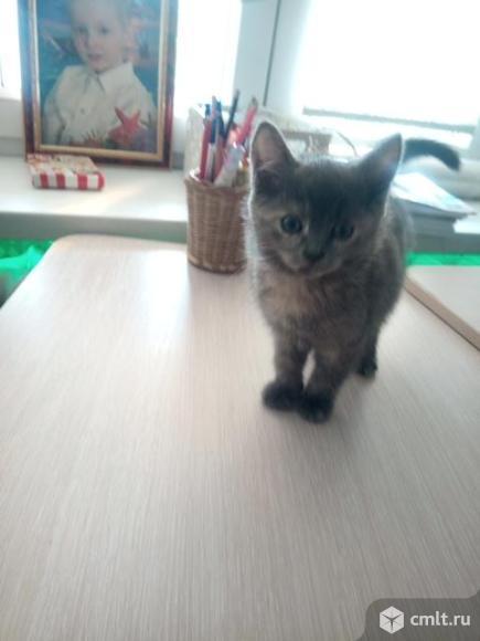 Котята отдам даром.. Фото 1.