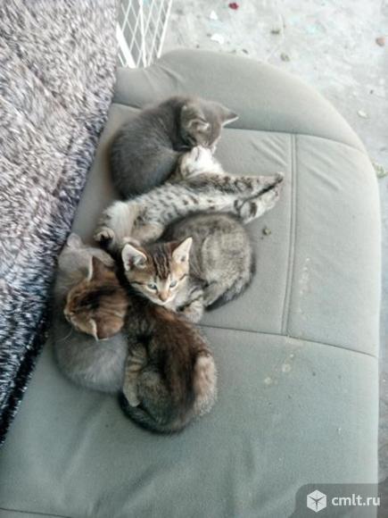 Котята отдам даром.. Фото 6.