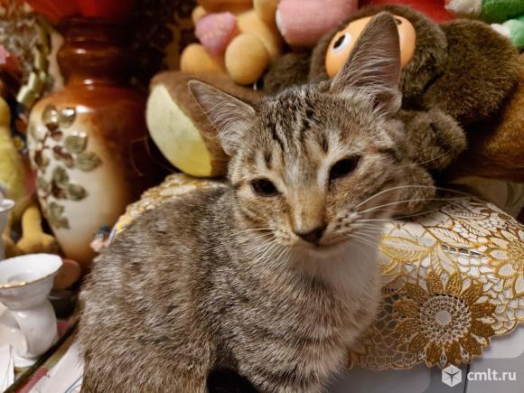 Котята в хорошие руки. Фото 9.