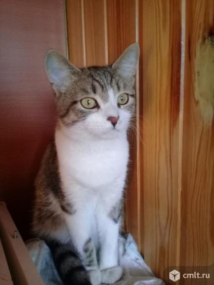 Кот Степан ищет дом. Фото 1.
