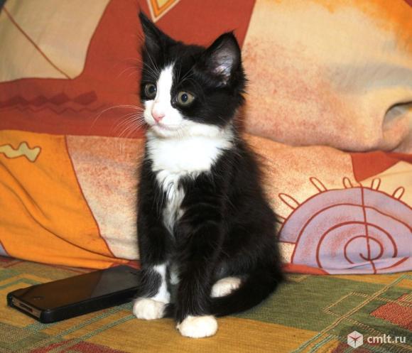 Котенок в хорошие руки. Фото 1.