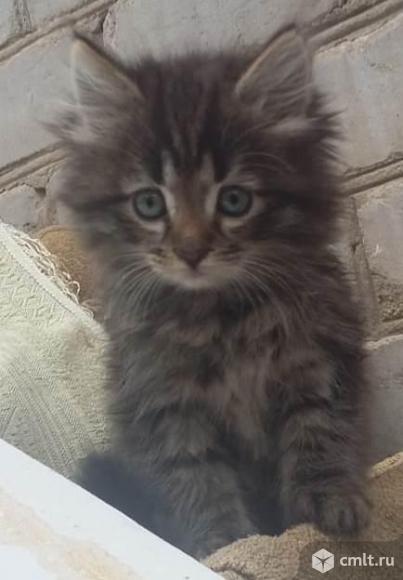 Помогите  спасти  котят. Фото 1.