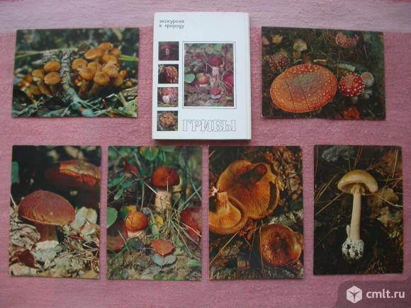 Открытки, комнатные растения, пестрый мир аквариума, грибы. Фото 3.
