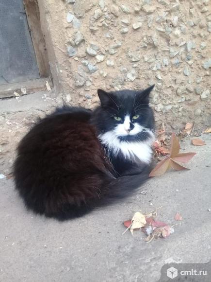 Кошечка Чернушка. Фото 1.