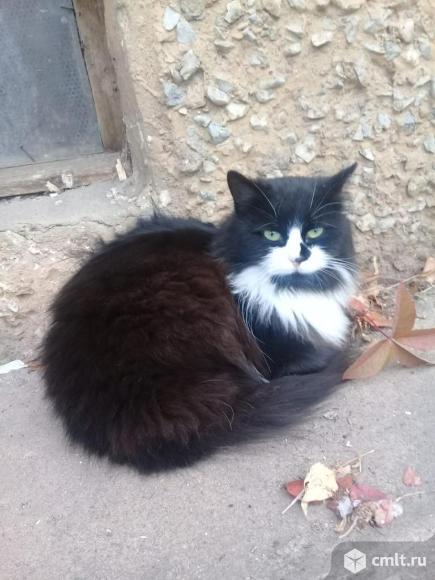 Кошечка Чернушка. Фото 2.