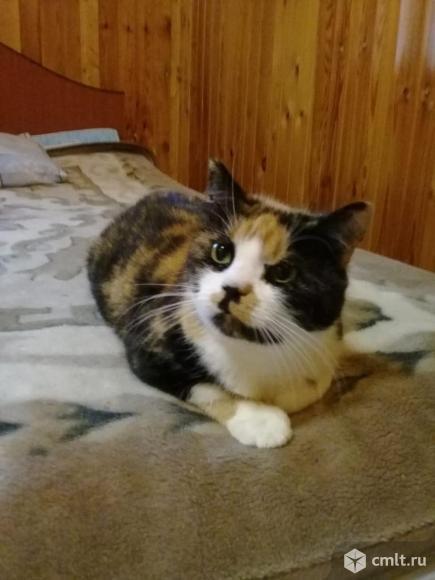 Котя в добрые руки. Фото 2.